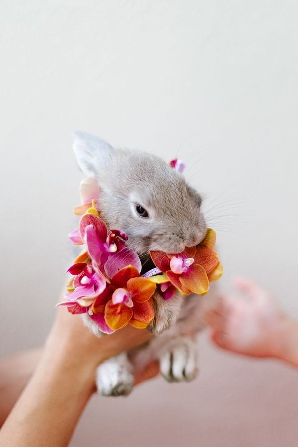 Flower Easter Bunny