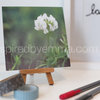 "Fine Art photographic floral print |  Image 3 |  a 5"" x 5"" Print - from the ""Bouquet of Life"" Collection  by Inspiredbyemma"