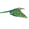 A4 print - Bee eater white fronted, flying by Treehouse Arts