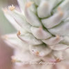 Desert Paintbrush 1.8m Macro Botanicals Collection by Botanicals by Kim Gensler Photography