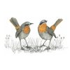 A4 print - Cape Robin chat 2 by Treehouse Arts