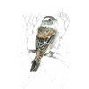 A3 print - Cape Sparrow by Treehouse Arts
