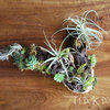 Airplant Wood Treasure Pieces by Living Room