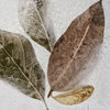 Frozen Leaves Photography Print Set | 60x60cm | Collection 4 | Wall Art | Leaves | Nature | Neutral | Home Decor | Bedroom Decor | Office Decor | Dining Room Decor by Sonny Mo Arts