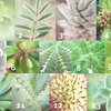 Build-Your-Own Custom 1.8m Macro Botanicals Collection by Botanicals by Kim Gensler Photography