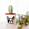 Mandala Bostie Planter by Sugar and Vice