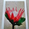 King Protea Crown - Photo Art Print on Paper by  ImPrintable | Art