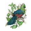 A4 print - Knysna Loerie, leaves (P) by Treehouse Arts