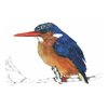 A4 print - Malachite Kingfisher (L) by Treehouse Arts