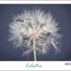 """Dandelions"" Printed Canvas Set (A4) by Afterimage"