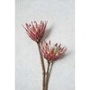 Red King Protea Wall Art Print Set | Collection 2 | A1 (60x90cm) by Sonny Mo Arts