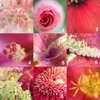 Wood Macro Botanical Collection - Circle by Botanicals by Kim Gensler Photography