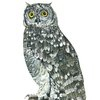 A4 print - Spotted Eagle Owl by Treehouse Arts