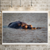 Hippo in the water on canvas by Vermeulen Photography