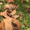 Beautiful handmade Necklace in autumn colors by Aprilheart