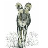 A3 print - Wild Dog by Treehouse Arts