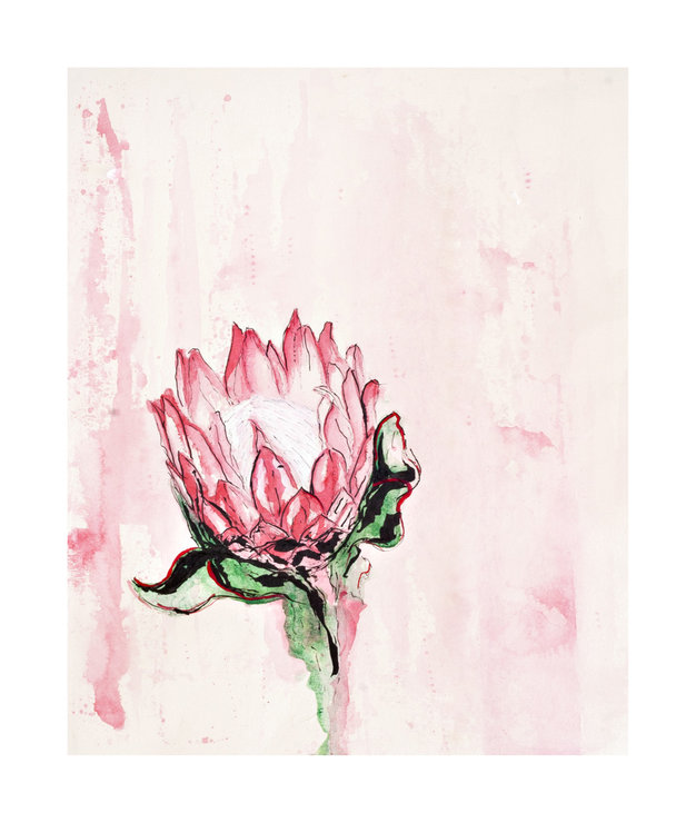 ​Botanical Illustration 02 – 'Protea Cynaroides' by Abundance Designs