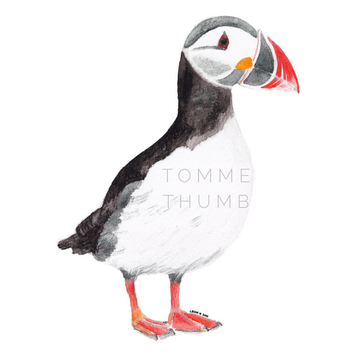Printable wall art - Puffin illustration by Tomme Thumb