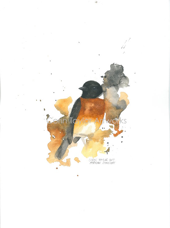 African Stonechat - Original Watercolour by Corin Taylor Artworks