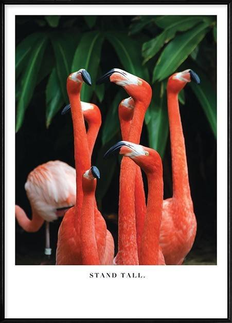 Keep Your Chin Up (Flamingos) - ANFL4603D (500x700mm) by Boluo