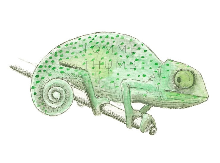 Printable Wall Art - Chameleon Illustration by Tomme Thumb