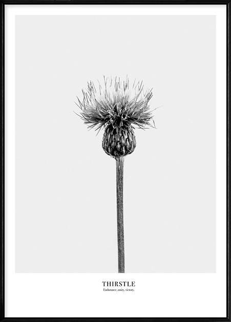 Boluo Framed Nordic Canvas Print Ready To Hang - Humble Resilience (Thistle)(426X600mm) by Boluo