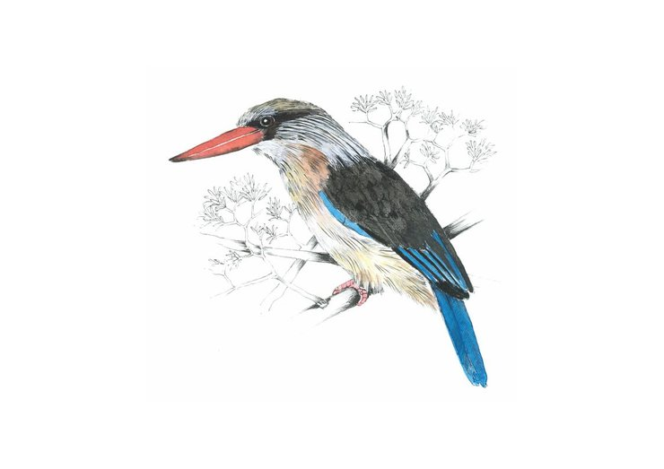 A3 print - Brown headed Kingfisher by Treehouse Arts