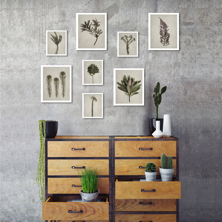 small fynbos garden gallery wall 8 framed prints in white box frames by natascha van niekerk fine art photography