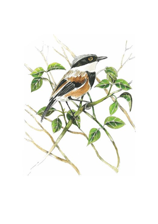 A4 print - Cape Batis by Treehouse Arts