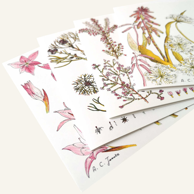 Greeting Card ~ set of 4 by CoralBloom Studio