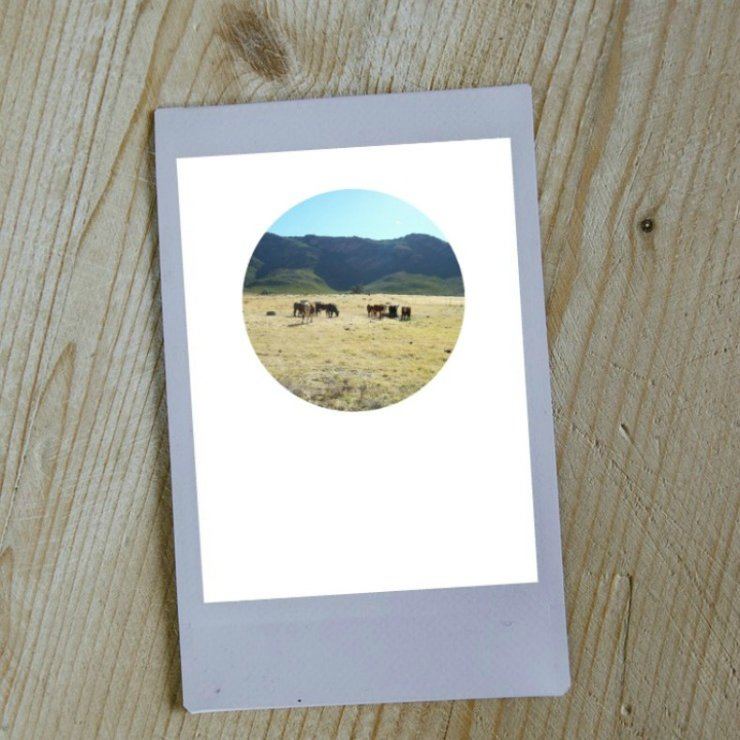 Digital Circular Print - Cattle by Prints by Roxb