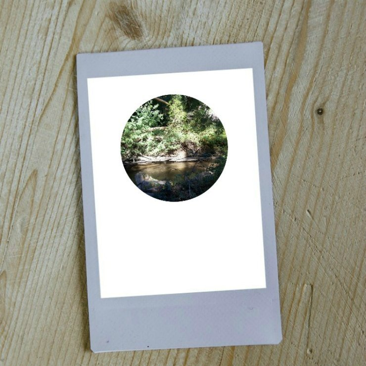 Digital Circular Print - Forest 2 by Prints by Roxb