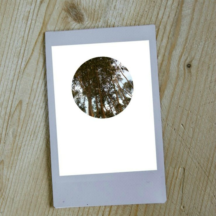 Digital Circular Print - Tall Trees by Prints by Roxb