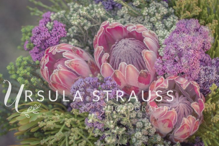 Floral Photography - Fynbos Bouquet - Digital Print  by Ursula Strauss Photography