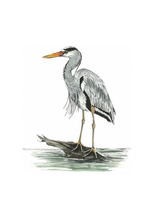 A4 print - Grey Heron by Treehouse Arts