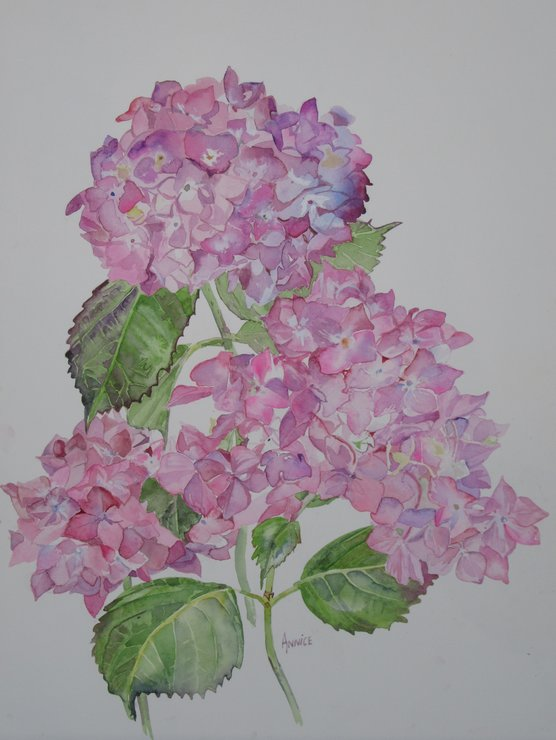 Pink Hydrangea watercolour  by Two Generations Creations