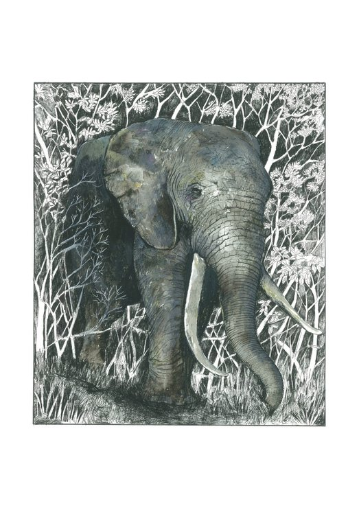 A4 print - Knysna Elephant by Treehouse Arts