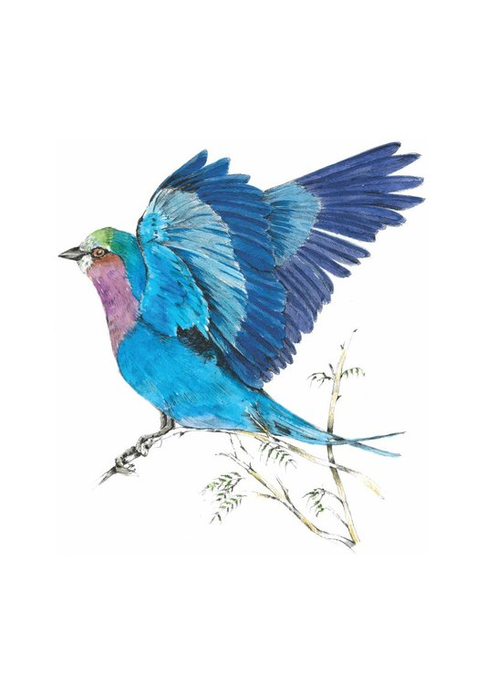 A4 print - Lilac Breasted Roller by Treehouse Arts