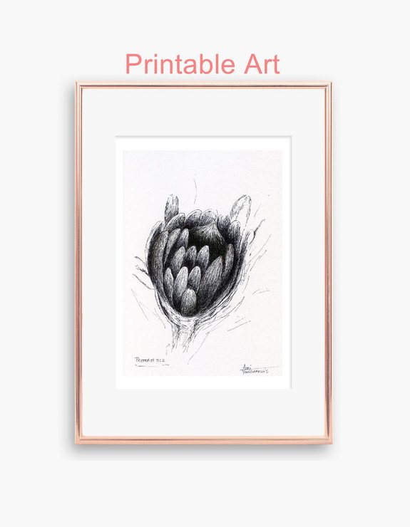 Printable Abstract Protea Flower Botanical Pen Drawing in Size A5 and A4 (PDF). Small Wall Art Sketch for Nature Lovers made in Cape Town. adri art  by WHISP by Adri
