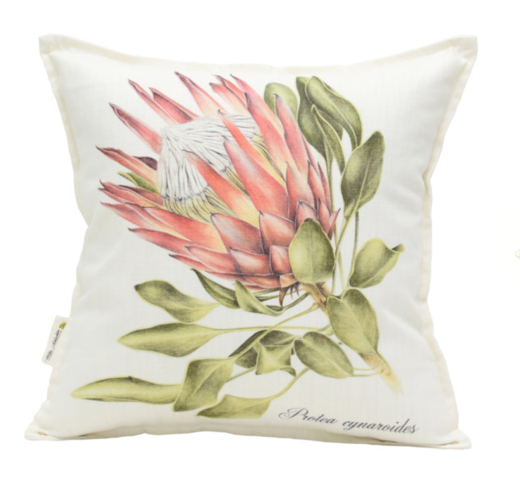 Protea cynaroides (side) scatter cuhion by Willie Schlechter Botanical Art & Illustration