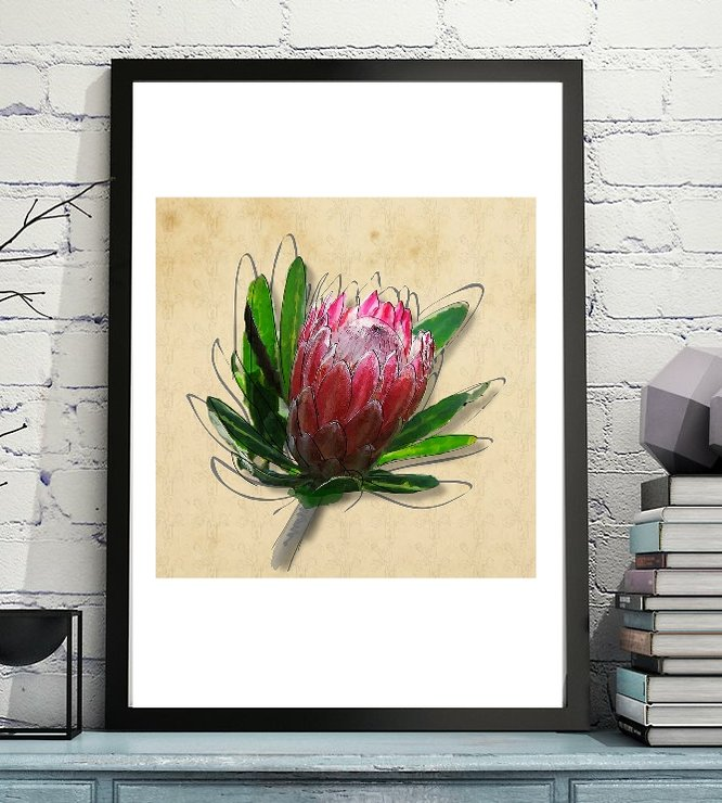 King Protea - Botanical Flower Art Drawing Print - File by  ImPrintable | Art