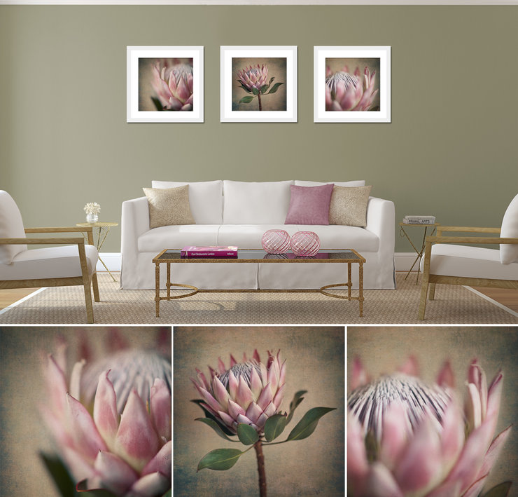 Large Square Protea Print Set 3x 50x50cm Prints Framed