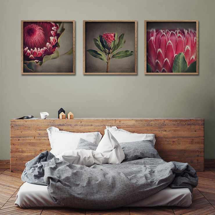Red Protea 3x 60x60cm Prints Hello Pretty Buy Design