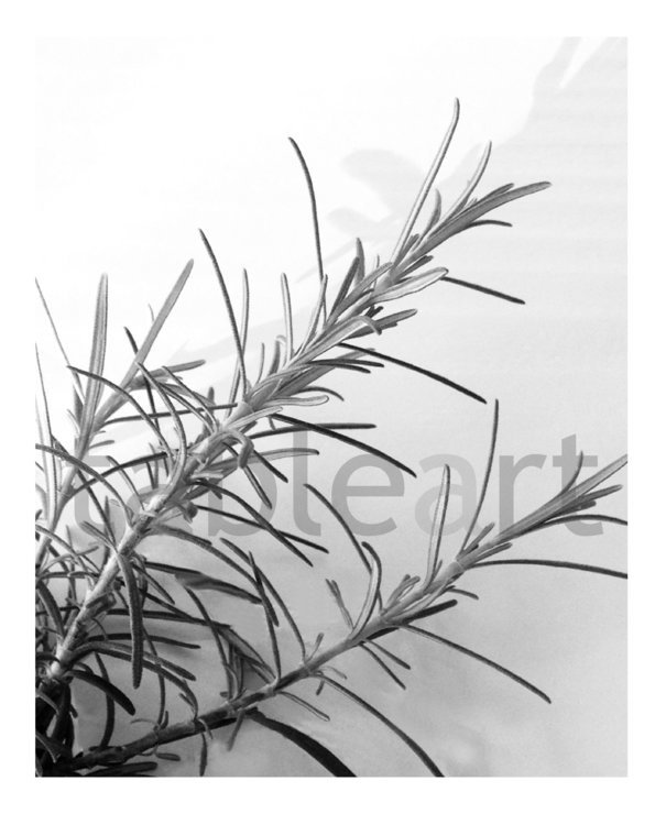 Art print: Rosemary by TableArt