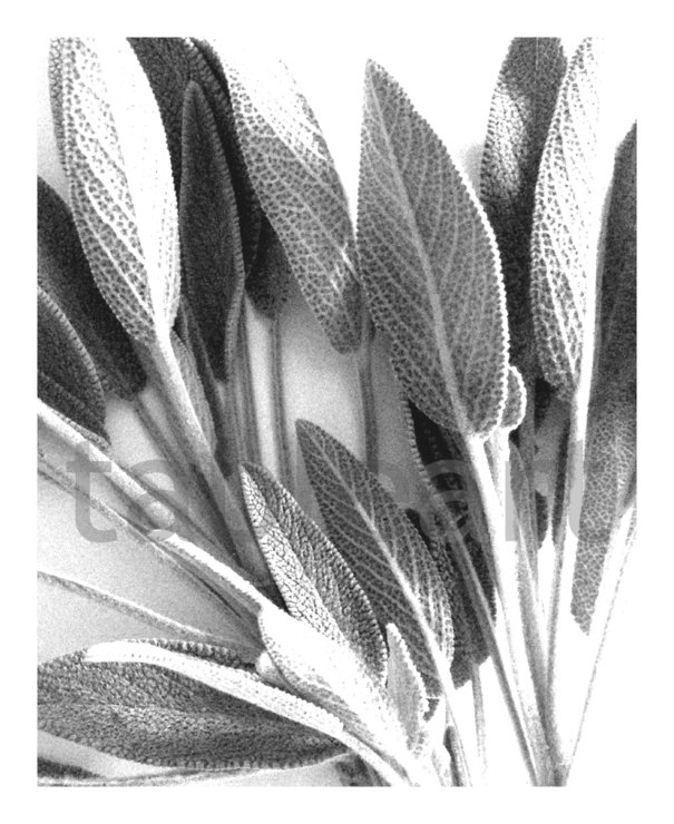Art prints: Sage mono by TableArt