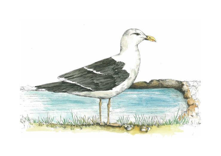 A4 print - Seagull by Treehouse Arts
