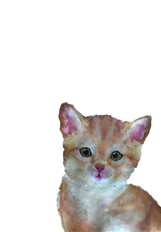 A4 Kitten Print by The Pencil Project  by Meghan Maconochie