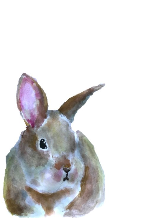 A4 Baby Bunny print by The Pencil Project  by Meghan Maconochie