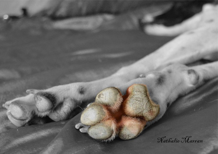 The Heart of the Paw by Marran Art & Photography
