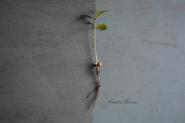 Life! A3 size by Marran Art & Photography